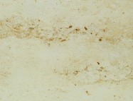 Technical detail: JURA GELB German honed natural, marble