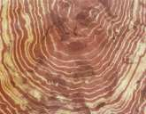 WOOD-GRAIN - China: marble polished, red light.