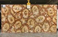 Supply polished slabs 0.8 cm in natural semi precious stone PETRIFIED WOOD BROWN TL0142. Detail image pictures