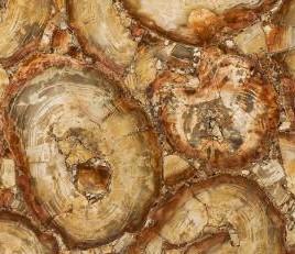 PETRIFIED WOOD BROWN