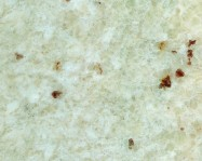 Technical detail: WHITE TYPE ROMANO Brazilian polished natural, granite