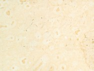 Technical detail: AJLOUN BRIGHT Jordan polished natural, limestone