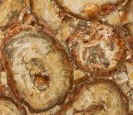 Technical detail: PETRIFIED WOOD BROWN Namibian polished natural, semi precious stone
