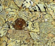 Technical detail: FELDSPATH TIGER WITH AMMONITES South Afrikaans polished natural, semi precious stone