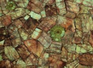 Technical detail: RED FELDSPATH WITH AMMONITES South Afrikaans polished natural, semi precious stone