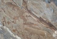 Technical detail: ILLUSION BRONZE Turkish polished natural, marble