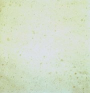 Technical detail: SNOW WHITE Turkish polished natural, marble